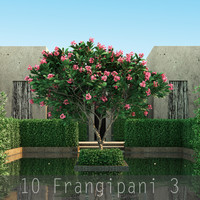 10 Frangipani 3