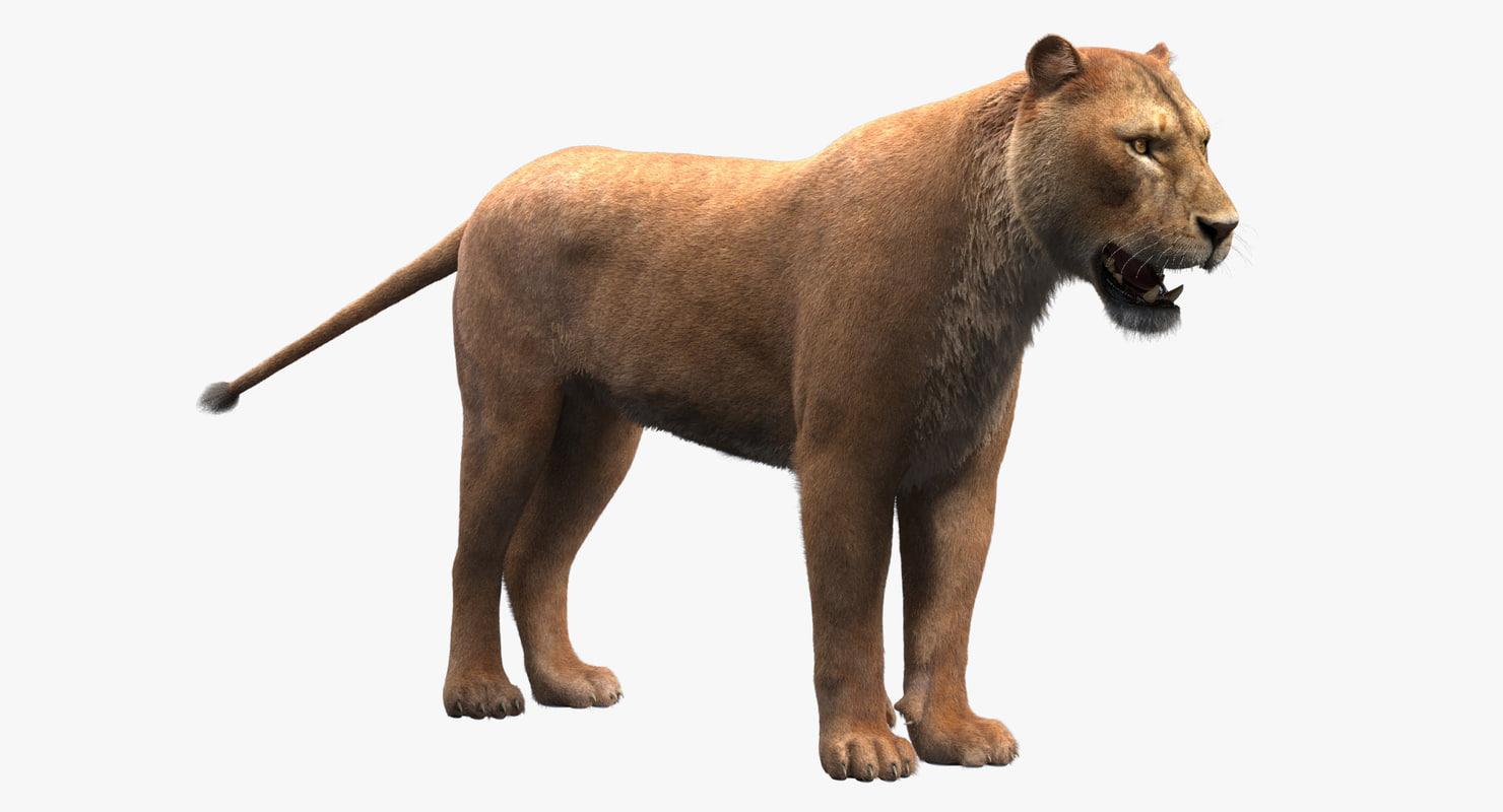 fur lioness 3d max