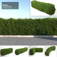 hedges corona v-ray 3d model