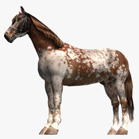 3d pinto horse model