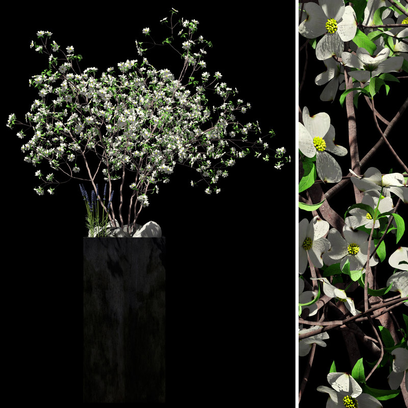 max black flowers dogwood lavender