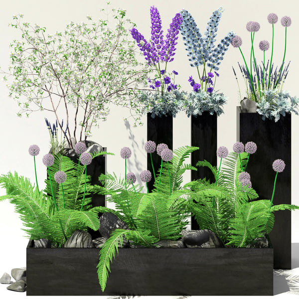 black pots flowers max
