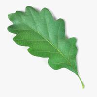 3d model oak leaf