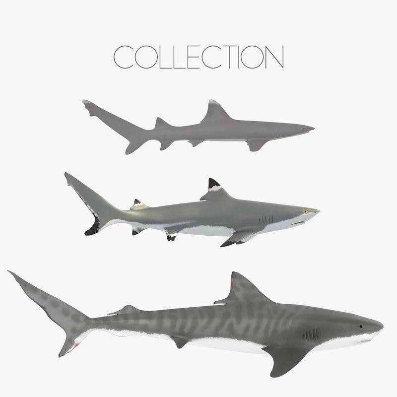 sharks tiger blacktip 3ds