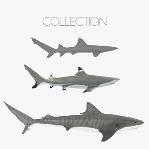 sharks tiger blacktip 3ds
