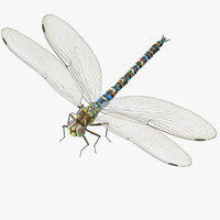 3d model dragonfly rigged