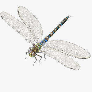 3d dragonfly rigged model