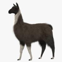llama shave haircut 3d obj