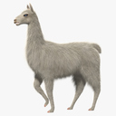 llama 3D models