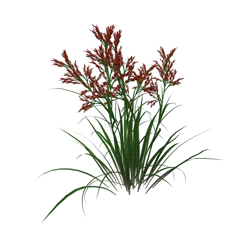 red tip grass flower 3ds