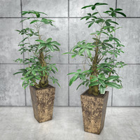 Stylized Money Tree Plant