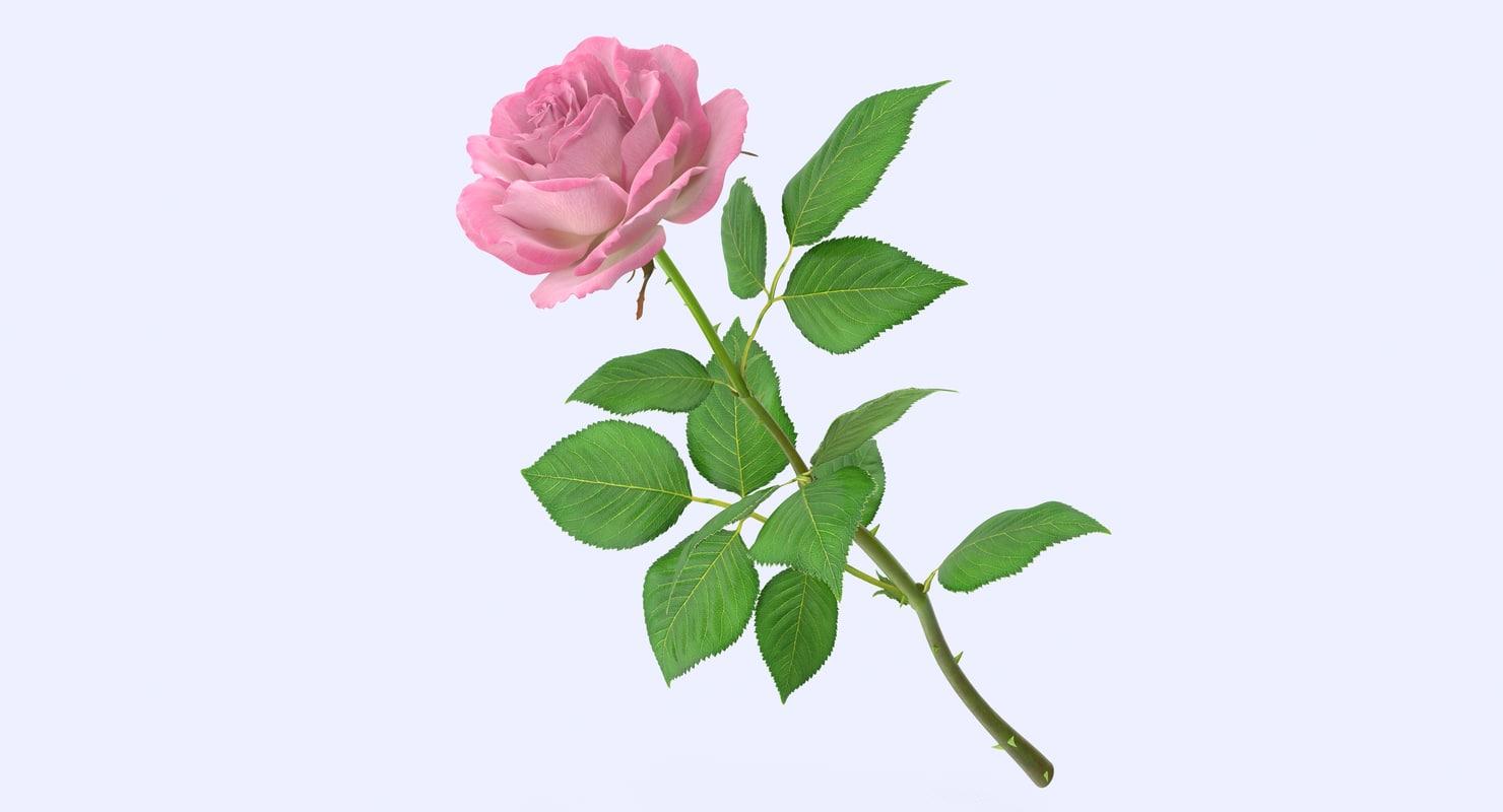 rose modeled leaf obj