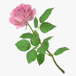 rose modeled leaf obj