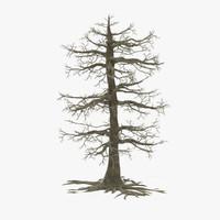 big dead oak tree 3d model