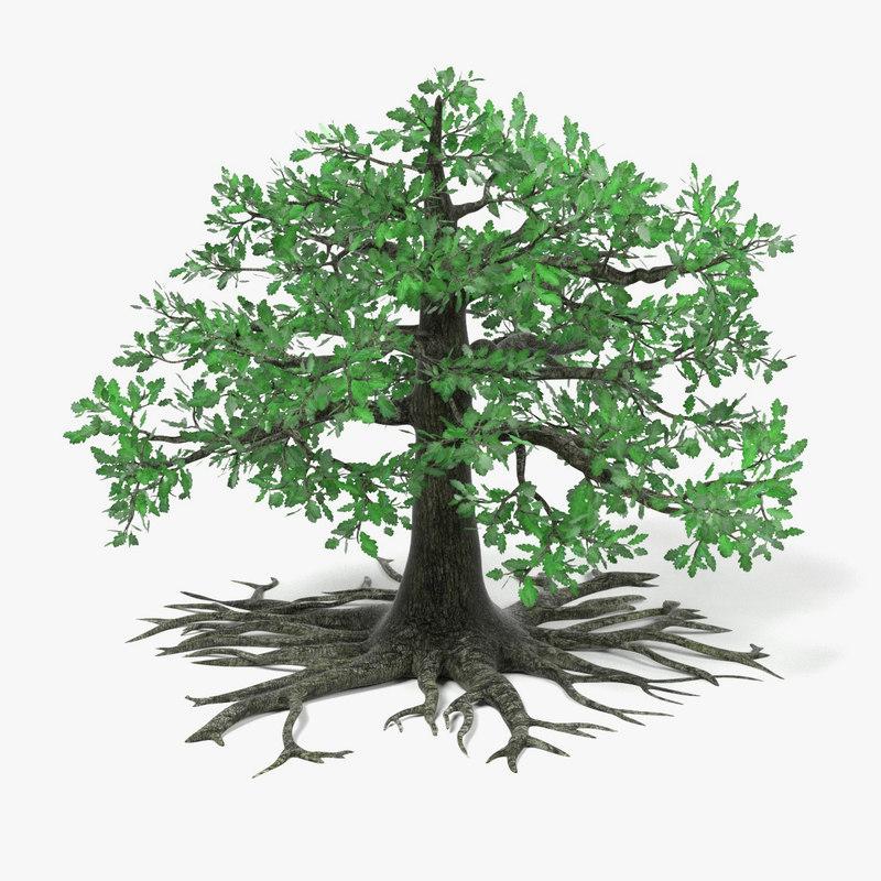 old oak tree 3d model