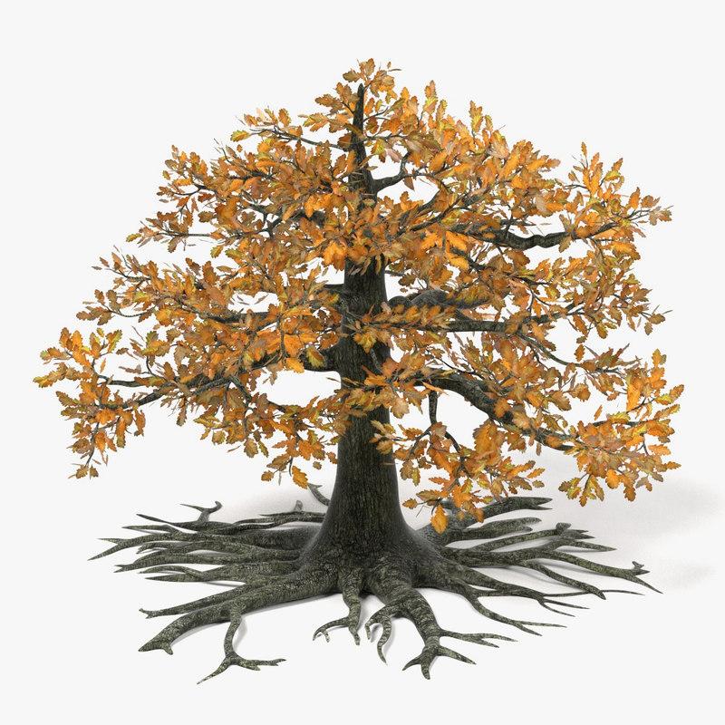 old oak autumn tree 3d model