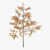 young autumn oak tree 3ds