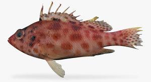 ma coral hawkfish