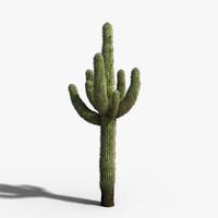 desert cactus 3d max