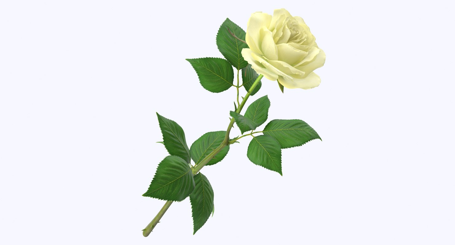3d model rose modeled leaf