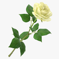 3d model rose modeled leaf