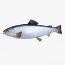salmon 3D models