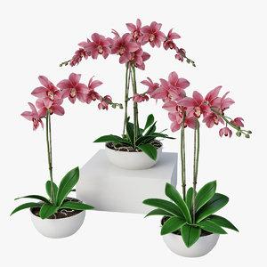 3d orchids model