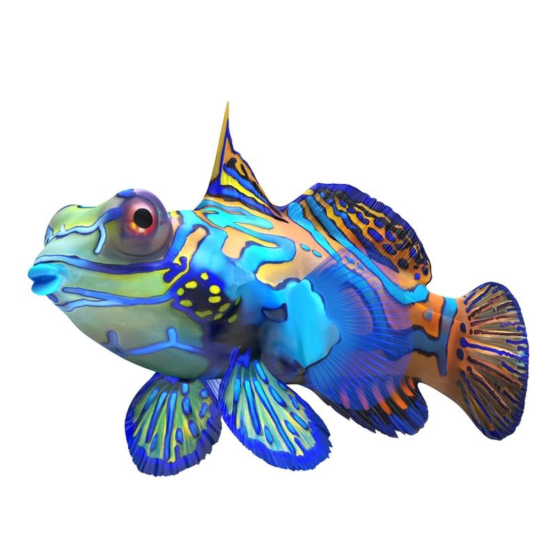mandarinfish colors 3d max