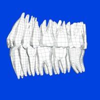 fbx subdivision mesh teeth