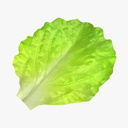 Leafy Vegetables 3D models