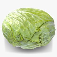 cabbage 1 3d max