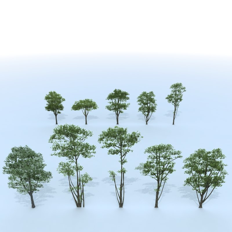 3d tree branches model