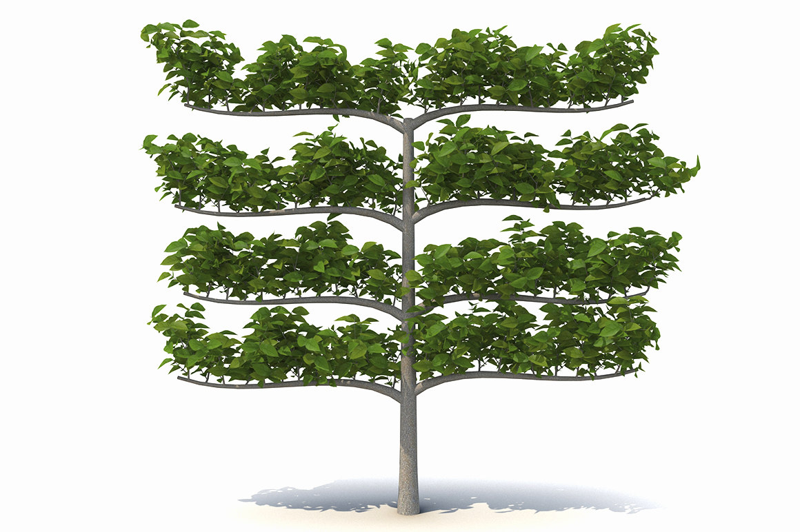 3d tree decorative branches model