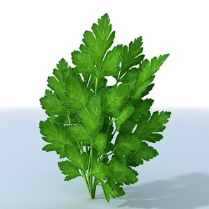 3d parsley herb