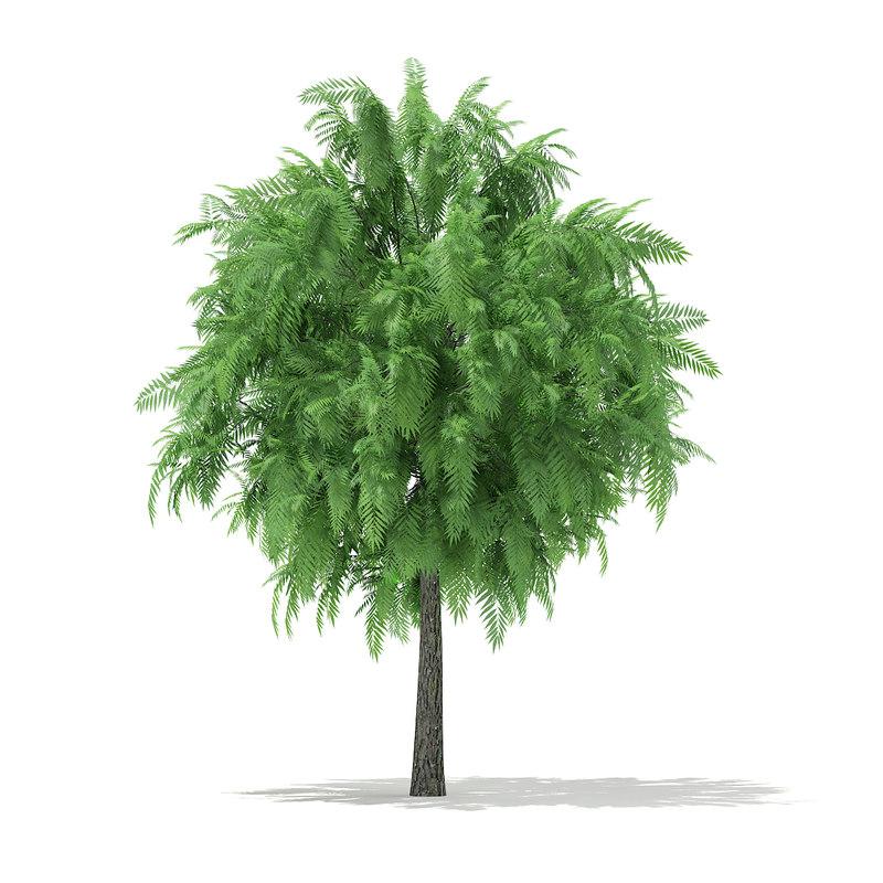 white willow tree salix 3d model