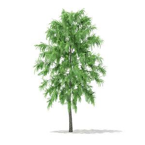 3d white willow tree salix