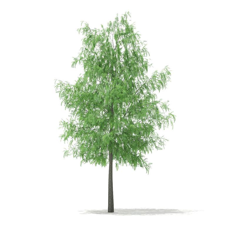 white willow salix alba max