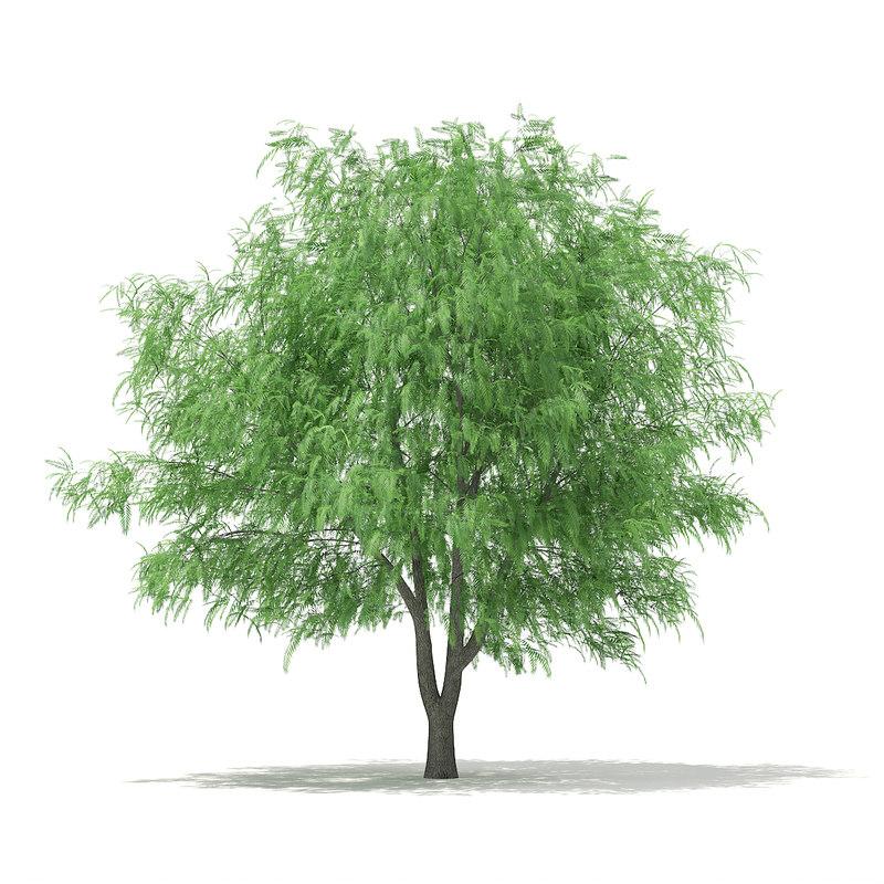 white willow salix alba 3d c4d