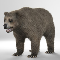 Brown bear(grizzly) - Realistic