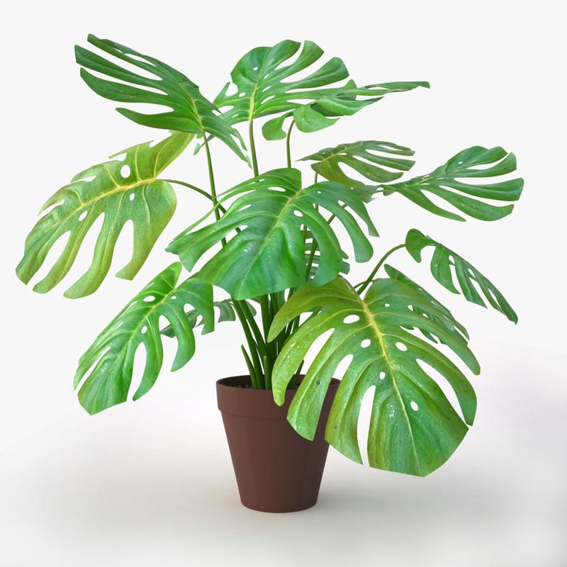 3d monstera plant model