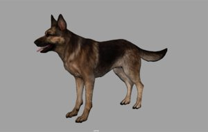 german shepherd internal 3d x