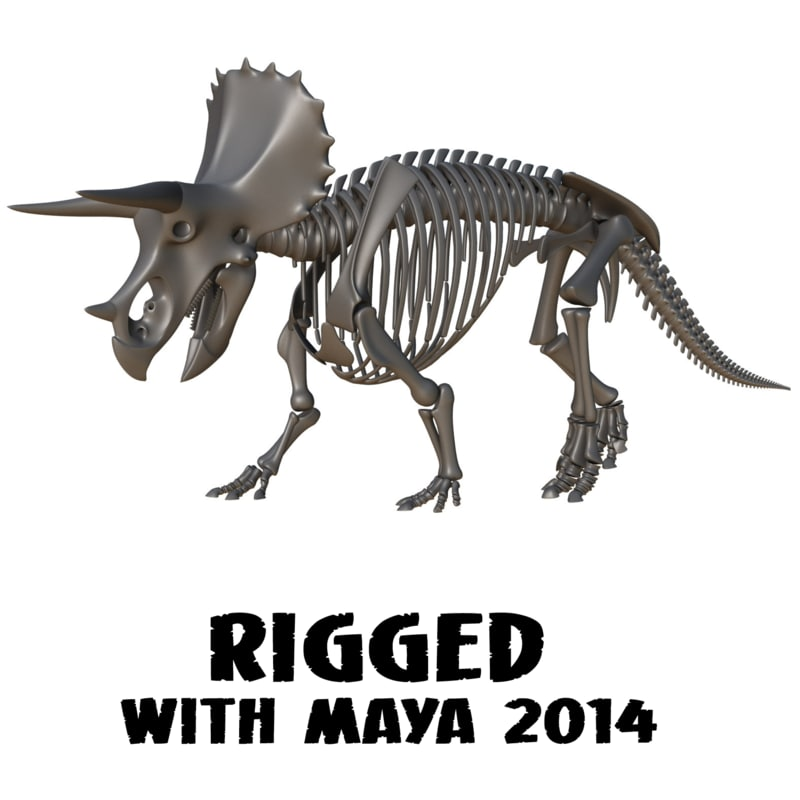 ma triceratops skeleton rigged