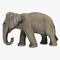 3d female elephant