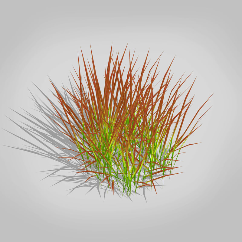 3d plant imperata-japanese blood grass