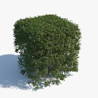topiary 3d model