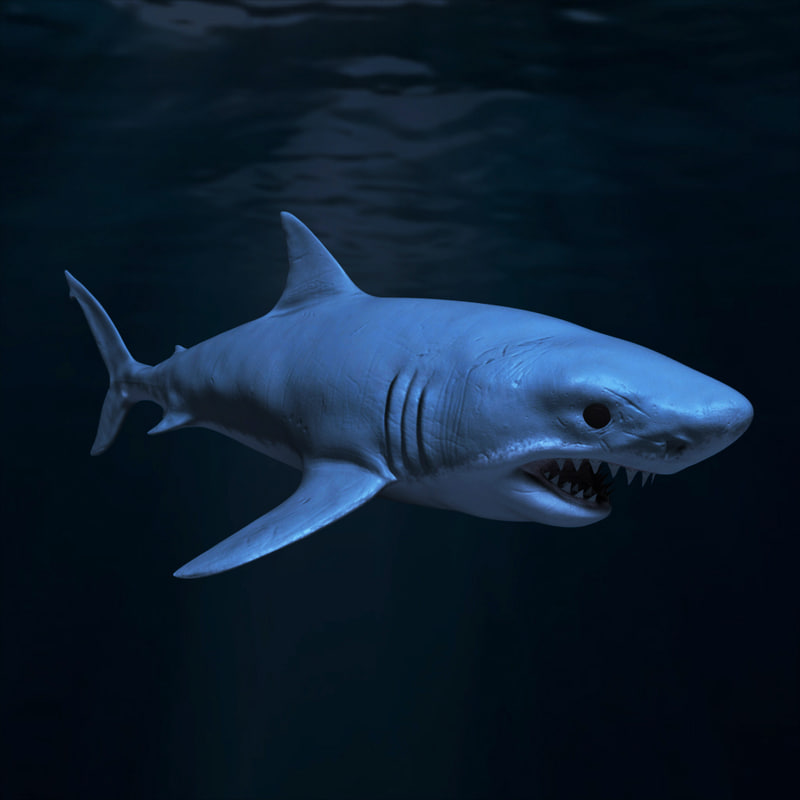 great white shark obj