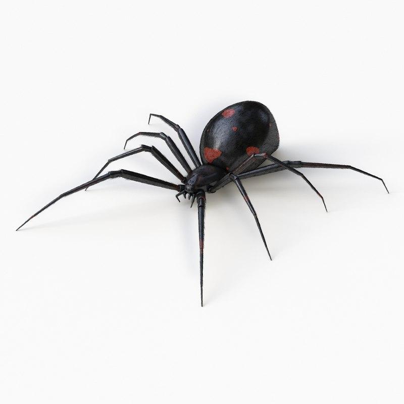 3d black widow spider model