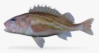greenstriped rockfish 3d model