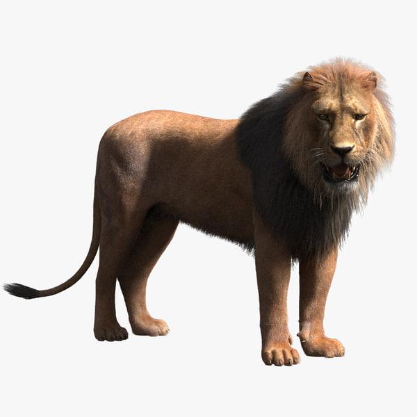 3d rigged lion fur model