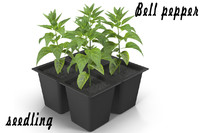 3d bell pepper seedlings model